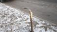 Вандалы сломали десять молодых лип в Невском районе