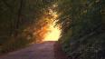 Запрет на посещение лесов города продлили до 14 июня