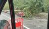 В Петербурге ветер валит деревья и дорожные знаки