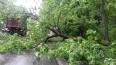 Упавшее дерево в Петербурге на проезжую часть перекрыло ...