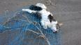 В Петербурге спасли кота, просидевшего на дереве двое су...