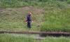 """Смольный косил траву и откачивал воду с территории полигона """"Красный бор"""""""