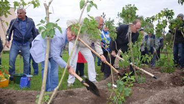 """В саду """"Ивана Фомина"""" высадили 300 кустов сирени"""