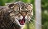 Вынесен приговор за циничное убийство купчинского кота Жорика