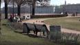 В Петербурге 1300 полицейских заблокируют входы в ...