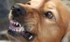 """Петербуржцев будут штрафовать за отсутствие таблички """"злая собака"""""""