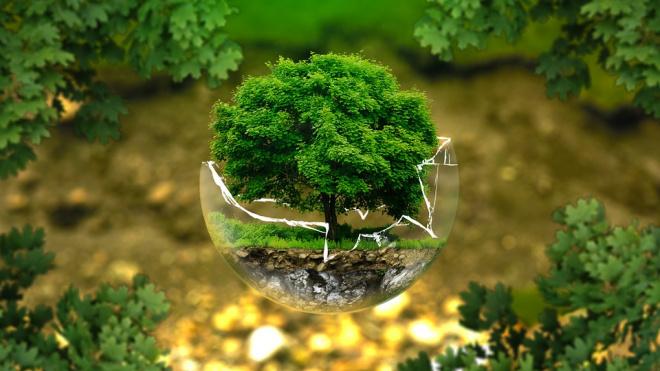 В Петербурге стартует Международный молодежный экологический форум