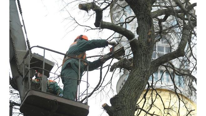 ЗакС одобрил грамотную рубку деревьев в Петербурге