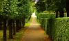 В Петербурге Летний сад станет платным в летний период
