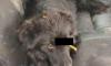 Бездушные живодеры из Ростовской области проткнули собаке голову трубкой (фото)
