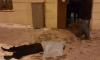 В Васильевском районе в пожаре погибли два человека