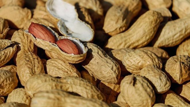 В порту Петербурга задержали 24,5 тонны опасного арахиса