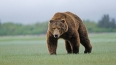 Храбрый горец в Кабардино-Балкарии избил медведя