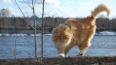 В воскресенье днем в Петербурге ожидается усиление ветра
