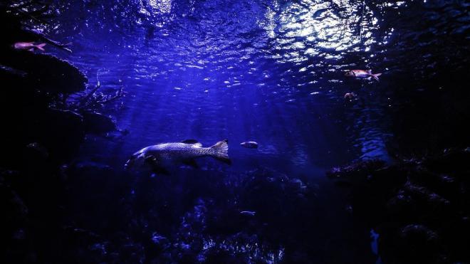 Клювый кит стал рекордсменом по погружению в воду среди млекопитающих