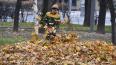 Эксперты выступили против тотальной уборки листвы ...