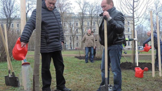 В Пушкине вырастет липа, которую посадил Георгий Полтавченко