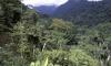 В джунглях Гондураса найдено древнее затерянное поселение с редчайшими животными
