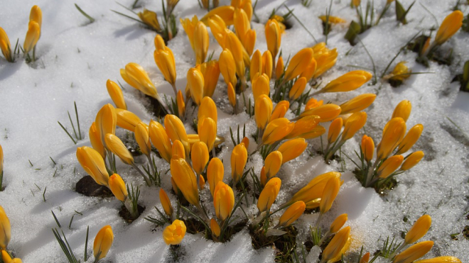 Осталось чуть-чуть: апрель будет теплым и солнечным