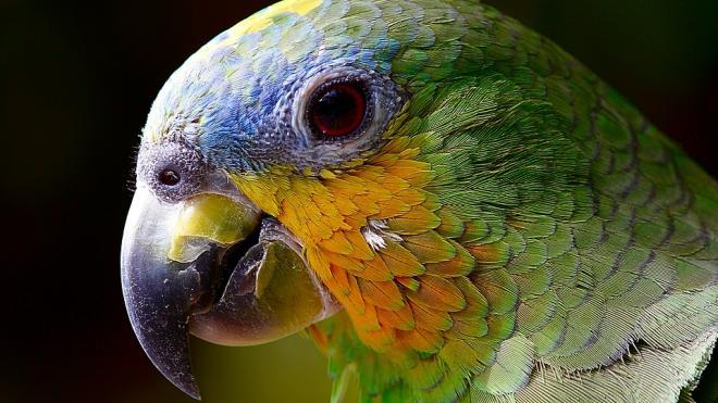 Обнаружен беззубый вид динозавров, проливший свет на историю распространения попугаевидных видов
