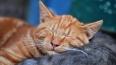 Ученые: оптимисты любят спать на левой стороне кровати
