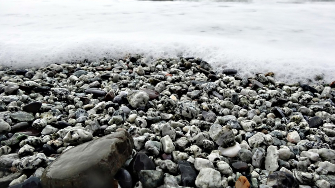 На пляж Сестрорецка вынесло утопленника