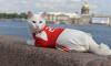 Кот-оракул Ахилл одобрил Декларацию обращения с животными