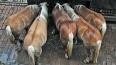 В Ленобласть не пустили шесть тонн кормовых добавок ...