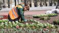На площади Ленина высадили 16 тысяч цветов