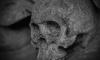 Женщина увидела в Лодейнопольском лесу скелет
