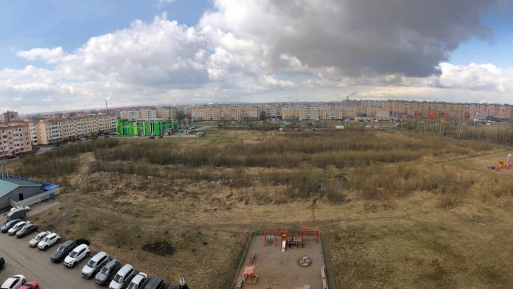 Жители Детскосельского поселка Пушкинского района борются за превращение пустыря в парк
