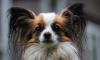 Петербуржцы спасли измученных собак, которые провалились в открытый люк