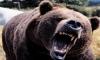 На Камчатке муж спас жену из лап медведя