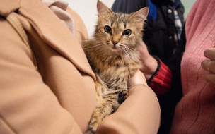 """Выставка-пристройство кошек """"БойКОТ серым будням"""""""