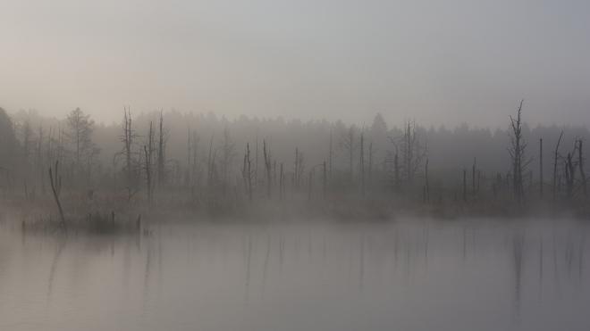 Изувеченный труп обнаружили в болоте Ленобласти