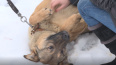 Петербургские депутаты хотят приравнять собак-помощников ...