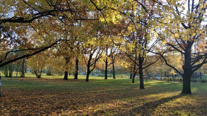 Смольный продлил агротехнический период до 2 ноября