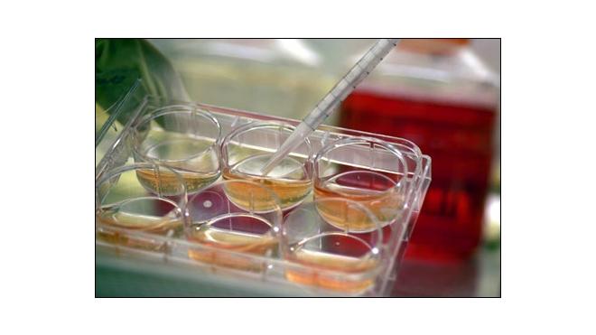Новый препарат на основе стволовых клеток сулит надежду на излечение больным гепатитами
