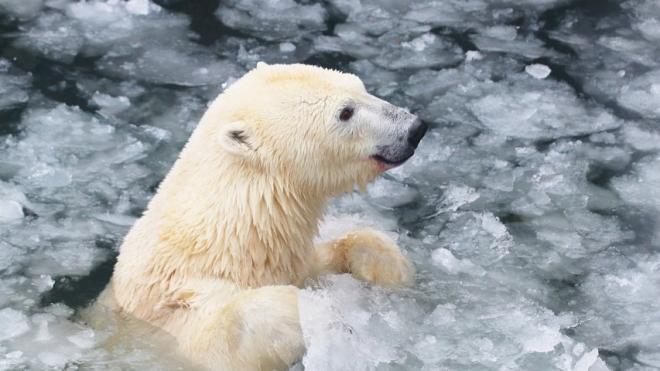 Специалисты рассказали, что обитатели Ленинградского зоопарка переносят перепады температуры
