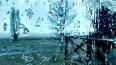 Мокрый снег и +5 градусов обещают в Петербурге во ...