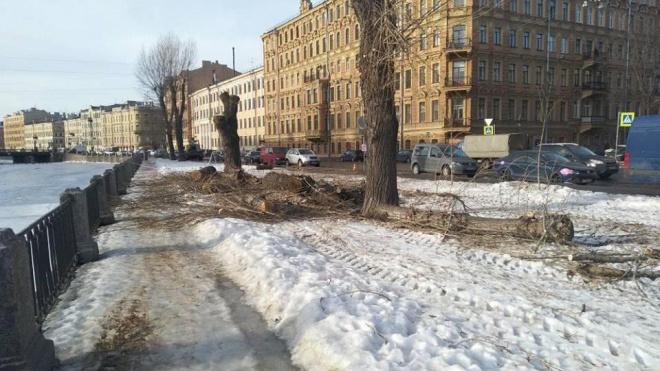 В сквере на Римского-Корсакова вырубили столетние деревья