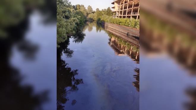 На реке Смоленке снова заметили бензиновые пятна