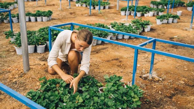 Садово-парковые предприятия Петербурга реорганизуют в бюджетные учреждения