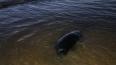 Осенний шторм выбрасывает тюленей на берег Финского ...