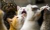 Жители Купчино жалуются на квартиру с четырьмя десятками кошек