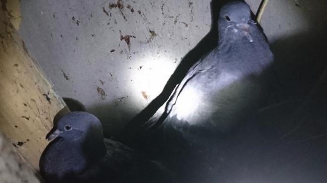 В Петербурге спасатели животных выручили попавших в беду голубей и кота