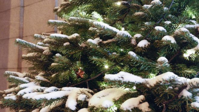 Петербуржцев ожидает морозный вторник без осадков
