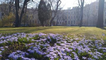 Голубые цветы украсили аллеи Северной столицы