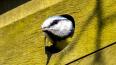 Очевидцы: На Луначарского дети палками убили птенцов
