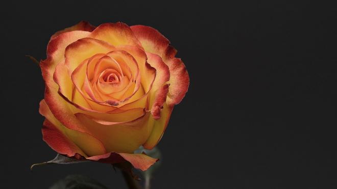 Неудачные признания на День святого Валентина: опыт читателей Piter.tv